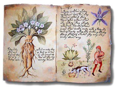 Conoscere le erbe magiche